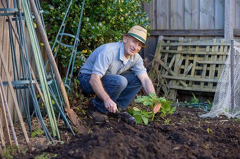Gardener planting plant
