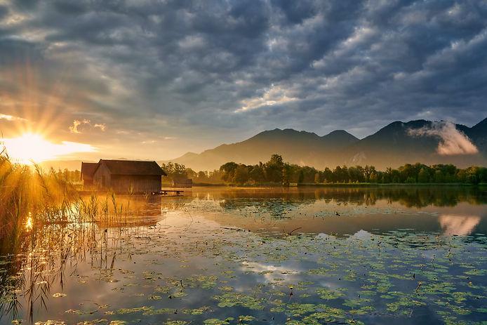 Lelies in a pond (beutiful pic).jpg