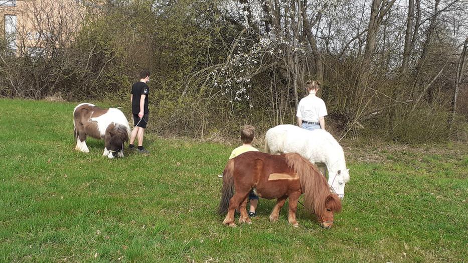 Spaziergang mit den Ponys