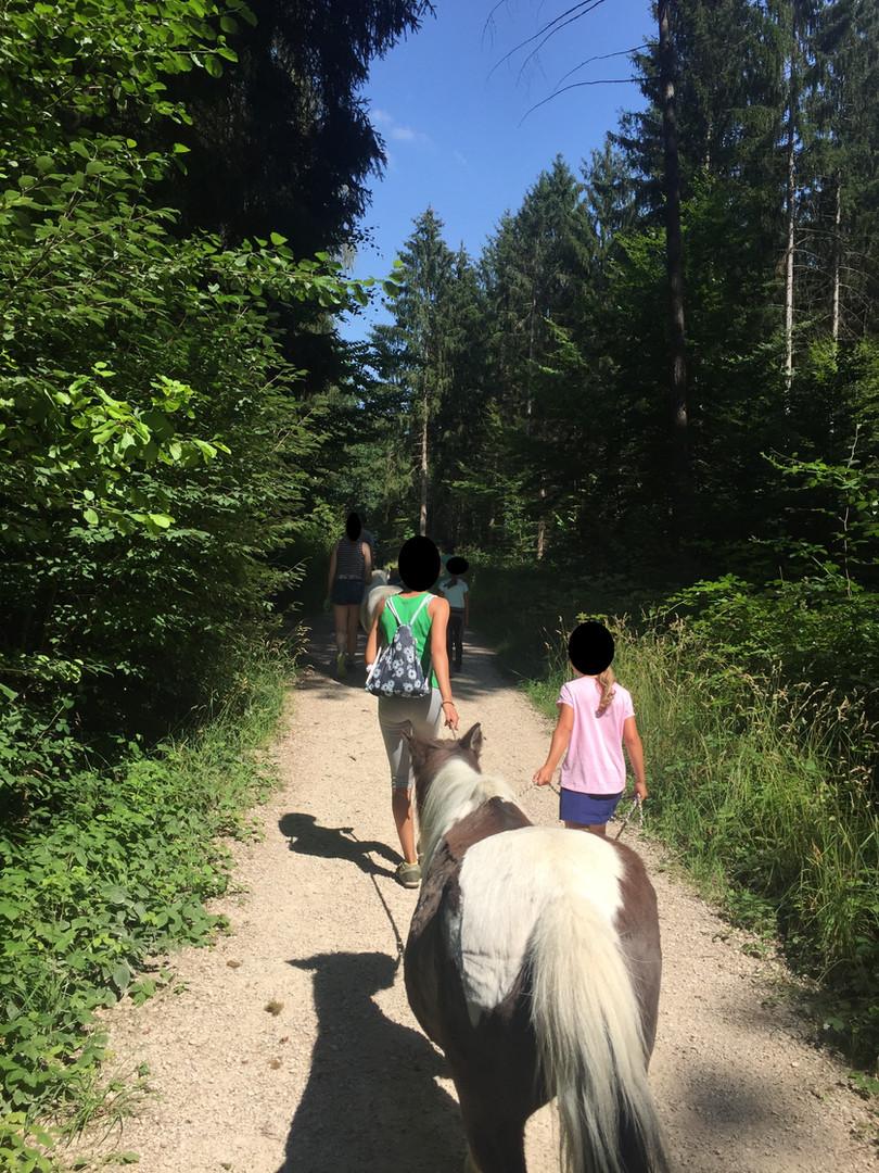 Spaziergang mit den Ponys im Wald