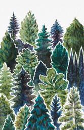 Amongst the Pine