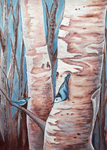 Winter Nuthatches