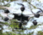 10 - 7h30 DRONE.jpg