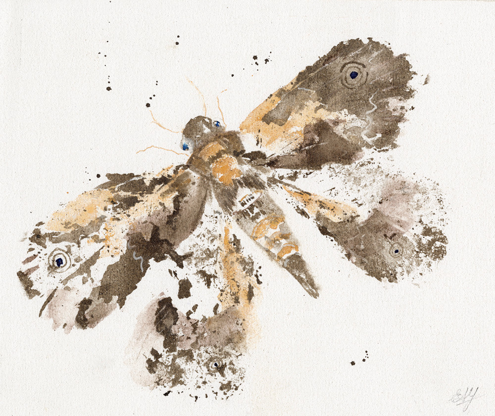 Moth (ink and watercolour) © Elizabeth Young