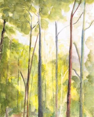Trees © Elizabeth Young