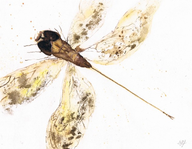 Dragon Fly (ink and watercolour) © Elizabeth Young