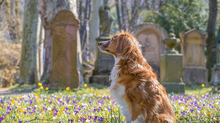 Movie Dogs and Chicago's Oldest Pet Cemetery