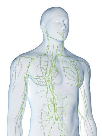 illustration-of-the-lymphatic-system.jpg