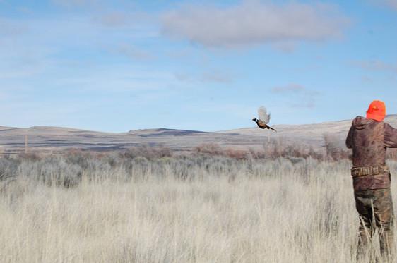 2017 Pheasants Forever - Junior Pheasant Hunt