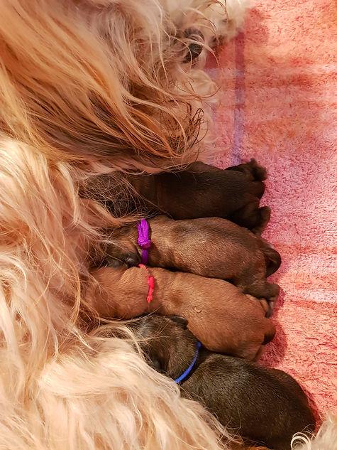 Ashby pups 3 August2020.jpg