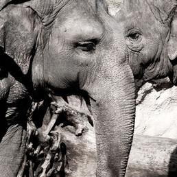 8265_elefantes.jpg