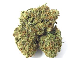 Cannabis light il Ministro Grillo assicura