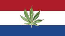 I Paesi Bassi proveranno a legalizzare la coltivazione della marijuana.                    Ad oggi è