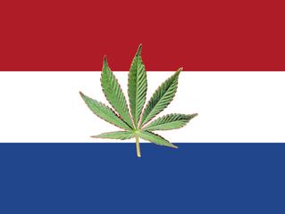 Coltivazione della marijuana nei Paesi Bassi presto la legge