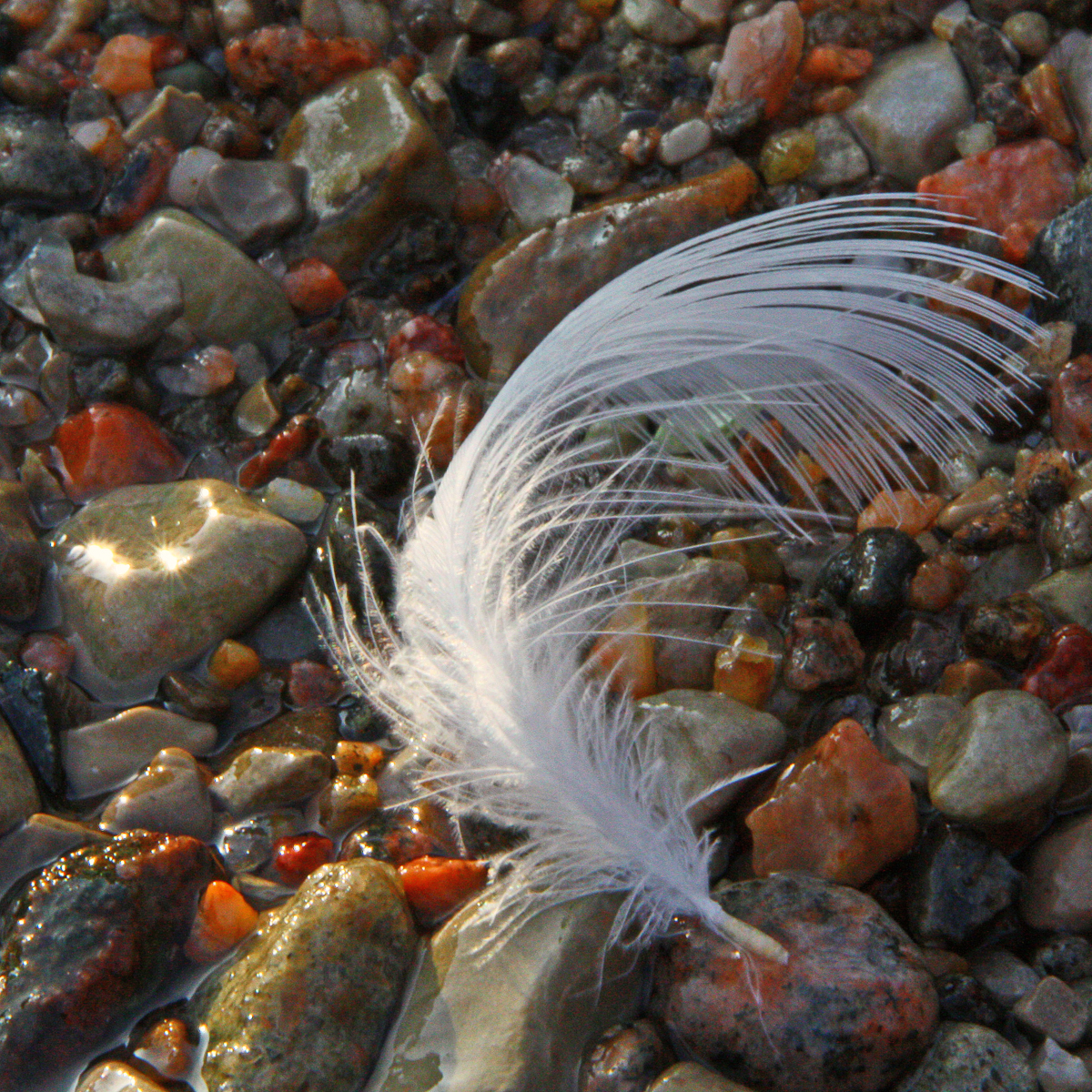Feather on Pebbles