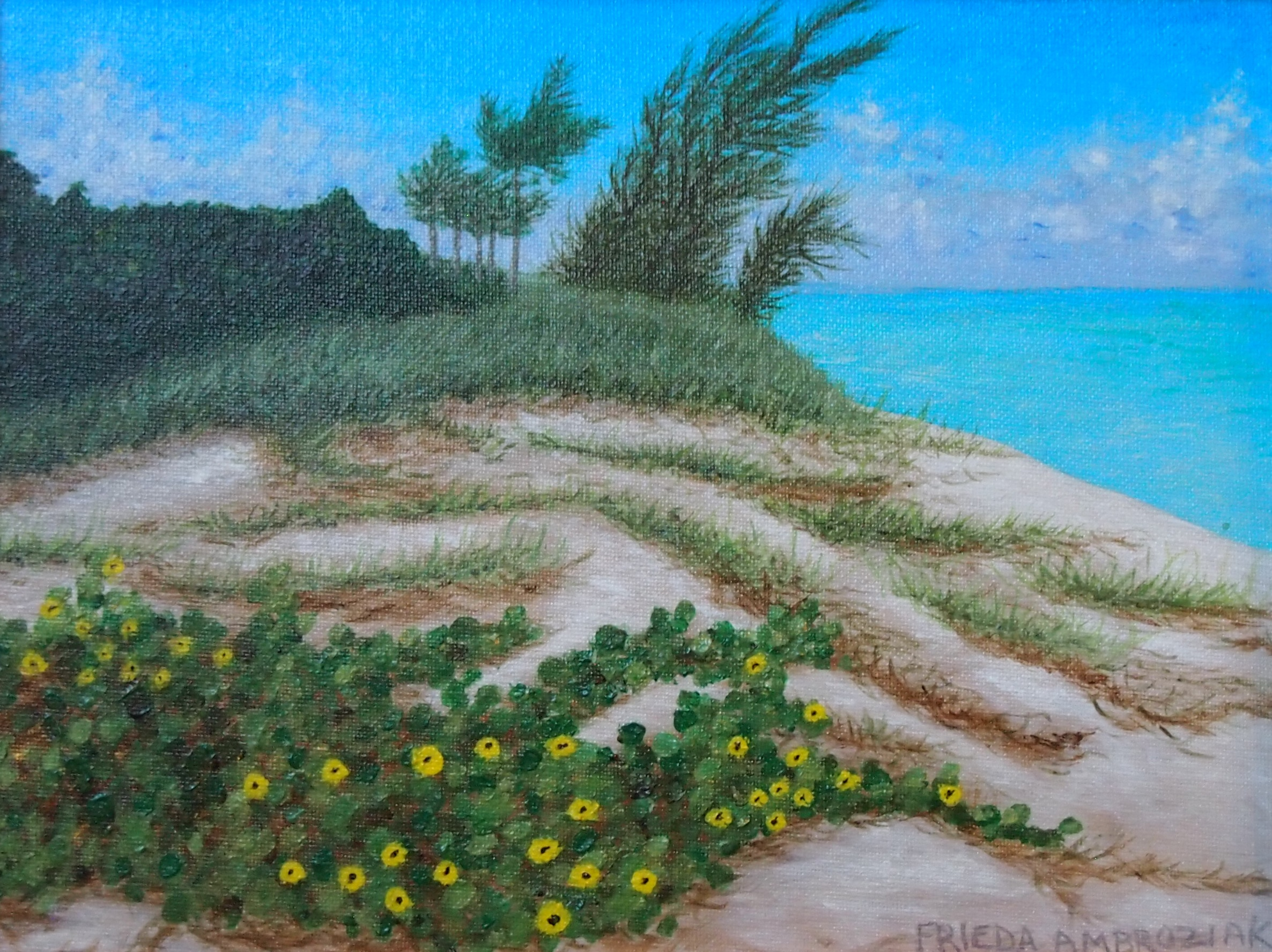 Yellow Flowers on Sand