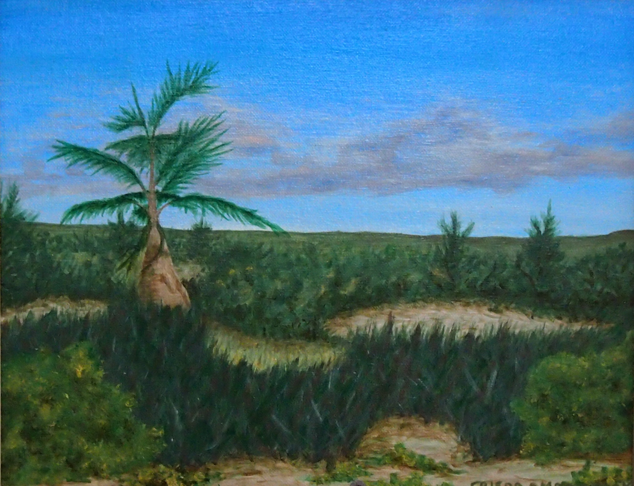 Lone Palm – Provincials Island