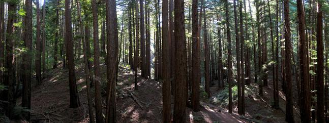 Redwood Regional.jpg