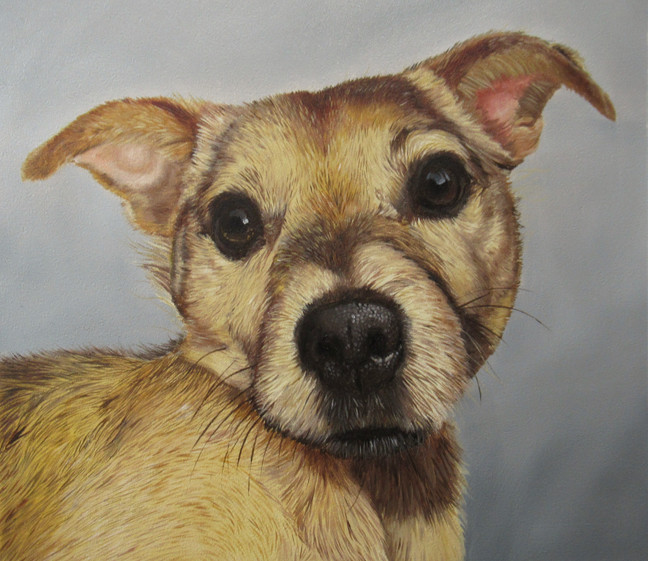 "buster. 8"" x 8"" oil on board"
