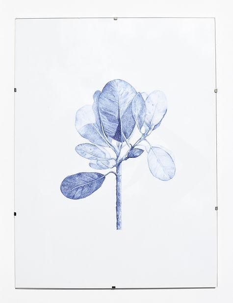 végétal 1.jpg