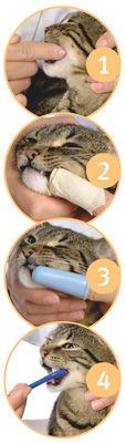 cat_dental_steps.jpg
