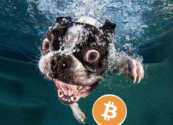 dog swim for BTC
