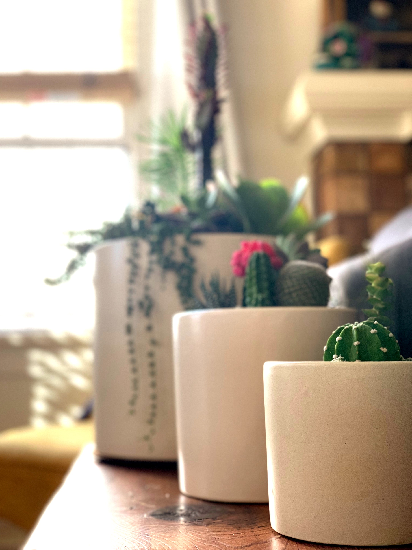 Trio of indoor Succulent and Cactus Arrangements