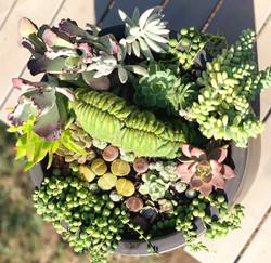 Outdoor Succulent and Cactus Arrangement - Patio