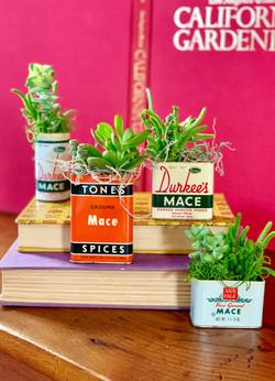 Succulent Spice Tins