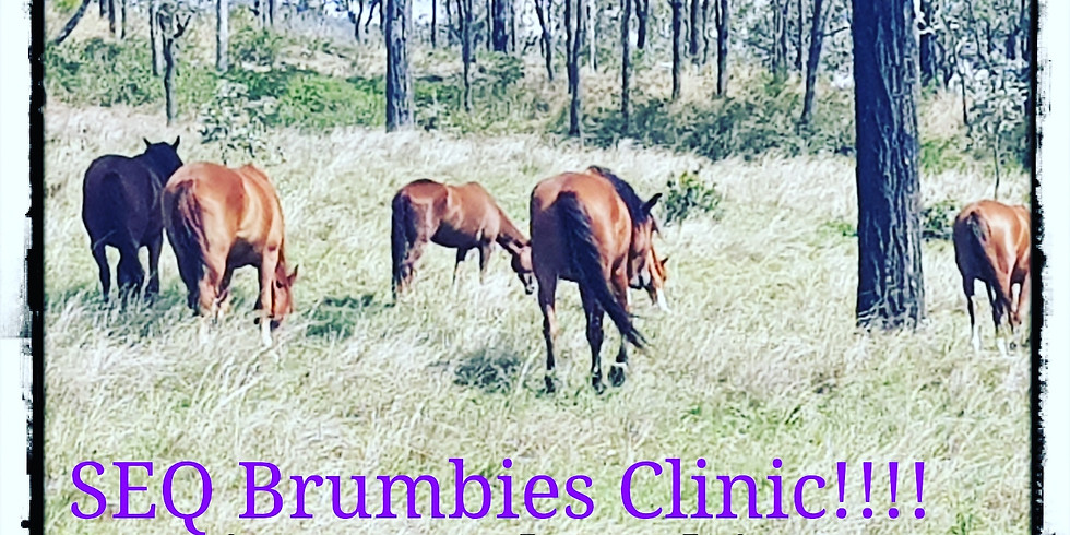 S.E.Q Brumby Handling Clinic