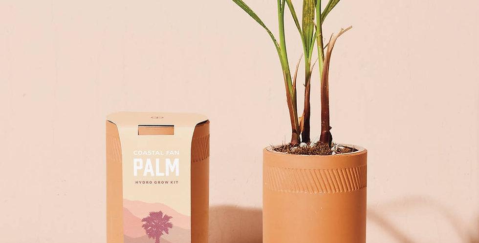 Palm Grow Kit