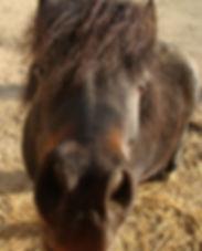 Naturopathie équine