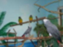 unsere Vögel (2).jpg