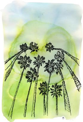 Les palmiers de Los Angeles