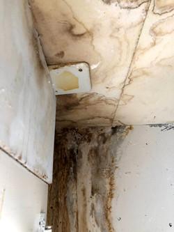Wasserschadensanierung probau service gmbh