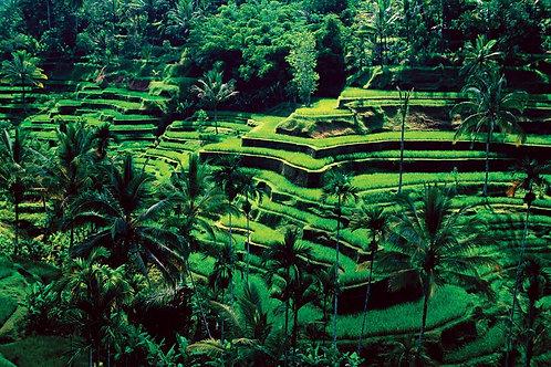 Gift Voucher - Bali Retreat