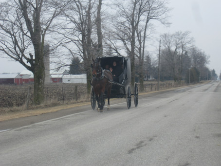 Amish and Mennonite Families Plan on PEI