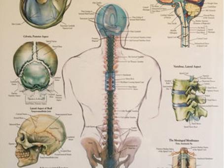Craniosacral System