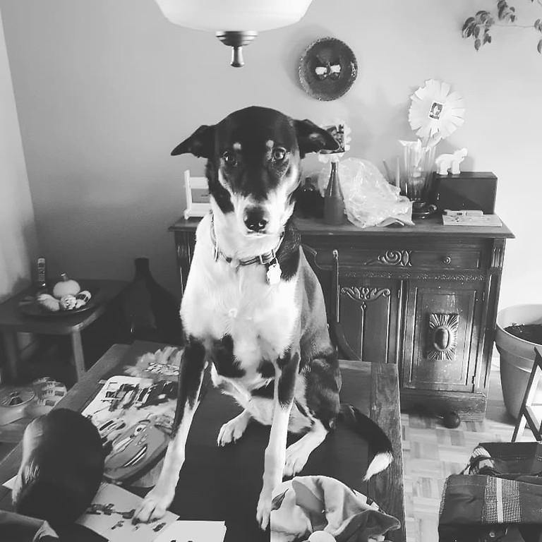 Consultation en comportement canin Val d'Or