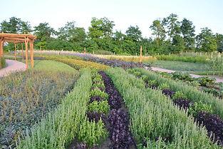 Eminence_Organic_Farm_08-1.jpg