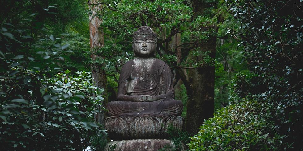 Dharma en el bosque