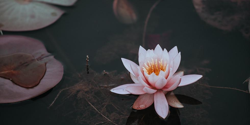 Retiro de meditación y filosofía budista   1 semana