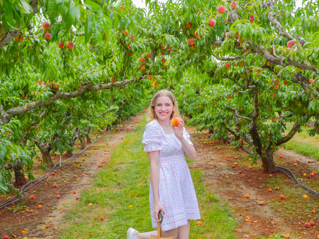 Peach Picking (& Other Socially-Distant Activities)