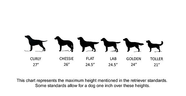 Curly coated retriever: A chart comparing sizes of the five retriever breeds.