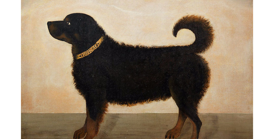 retriever portrait 19th century black an