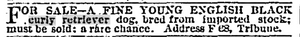 Copy of ad from 1877 Chicago Tribune advertising curly coated retriever dog for sale.
