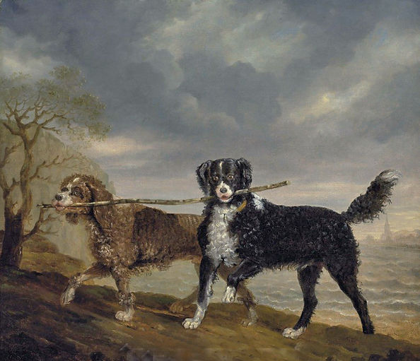 A Water Dog and an English Water Spaniel play with a stick.