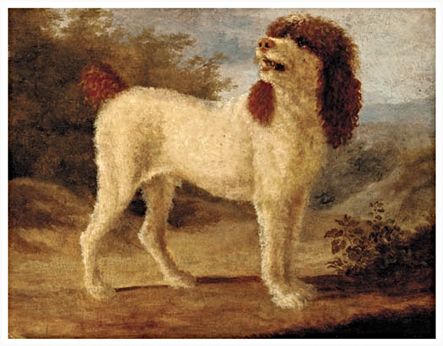 Water Spaniel painting by Jacque Agasse