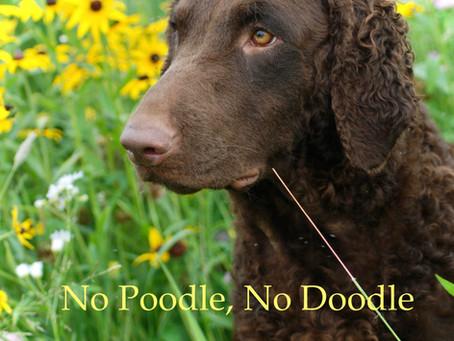 No Poodle, No Doodle