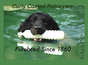 Purebred Since 1860.jpg
